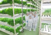 ハーブ専門の植物工場設立